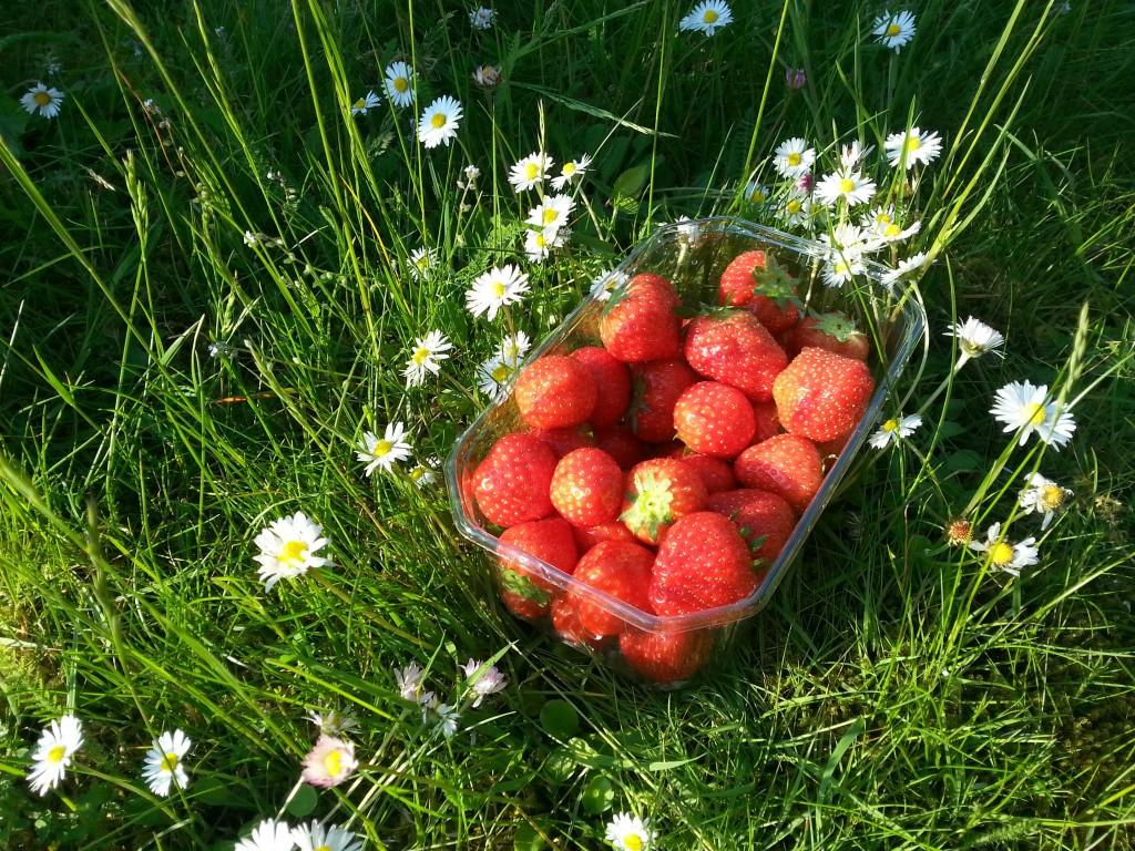 Jordgubbar i gräset