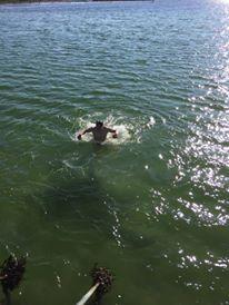 Har konstigt nog inte tagit så många bilder på sista tiden, men 1 hade jag! Första doppet för några veckor sedan, det var kallt!