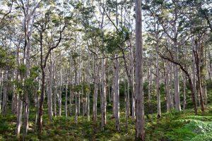 Forest Grove National Park - motsatsen till den röda öken i norr.